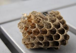 Stukje van wespennest